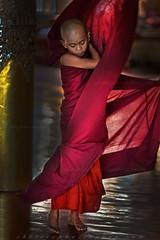 _MG_6312-wat-thail-wattanaram-maesot-thailande-christophe-cochez-cop (christophe cochez) Tags: burmes burma birmanie birman myanmar thailand thailande maesot myawadyy monk bonze novice religion watthailwattanaram travel voyage bouddhisme buddhism portrait