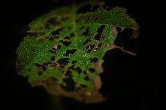 * (vieubab) Tags: automne bois branchage branches bokeh extrieur fort feuillage feuille flouartistique feuillesmortes sonyflickraward lumire macro nature unlimitedphotos plante saveearth sony verdure vert
