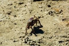 Crab (E. Aguedo) Tags: crab atlantic ghost warwick beach sand fall rhode island new england ngc coast