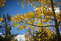 Caribou 4x4 Trail (JNB Photo Video) Tags: aspen trees fall colors changing nederland colorado boulder caribou 4x4 route