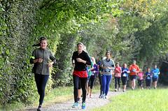 Hallwilerseelauf: Ideales Gelaende fuer die Laeuferinnen und Laeufer auf dem Halbmarathon