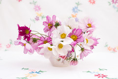 Pink and white cosmos (photoart33) Tags: pretty cosmos stilllife white pink vintage