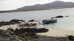 Taking cattle from Ensay (Bays of Harris) Tags: landingcraft ensay harris cattle
