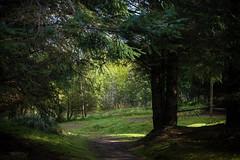 clearing (pamelaadam) Tags: tomintoul moray scotland autumn september 2016 stmikes work youthwork ellonparishchurch churchofscotland digital fotolog thebiggestgroup tree plant