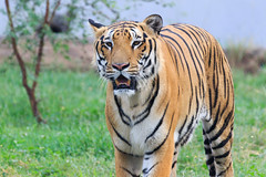 WJ9A8529 (Tarun Chopra) Tags: chandigarh chhatbir