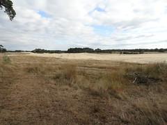 Het Wekeromsezand is een levend stuifzand gebied (johnv2400) Tags: wekeromsezand levend stuifzand gebied