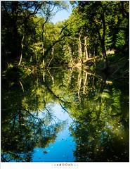 Upside down (nandOOnline) Tags: pond nikon vijver reflectioin bos forest bomen trees plasmolen zonlicht jansberg reflectie sunlight natuur d500 sintjansberg landschap limburg nederland