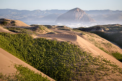 Dune Foliage (Kevin Dinkel) Tags: rock hike sand sunrise bay foliage outdoor tan landscape morning light dunes california dune dinkelphotography ocean kevin travel morro outside beautiful pacific green central coast places formation