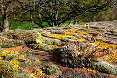 Colourful garden on a wall (southseadave) Tags: wall moss brickwall lichen chichester rx100