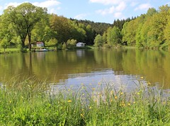 (Linda6769 (hiking)) Tags: flower tree germany pond village buttercup thuringia brden