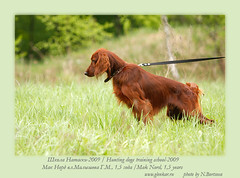 ds16 (Glenkar) Tags: dog gundog