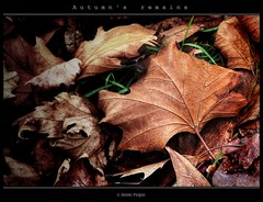 Autumn's remains #1 (Xavier Fargas) Tags: autumn stilllife naturaleza brown tree fall nature leaves forest season hojas panasonic explore bosque rbol otoo marron hdr estacin naturalezamuerta photofiltre goldenglobe photomatix 1xp xfp kartpostal bej abigfave dmcfz50 lumixdmcfz50 anawesomeshot theunforgettablepictures platinumheartaward goldstaraward flickrestrellas natureselegantshots spiritofphotography rubyphotographer vosplusbellesphotos panoramafotogrfico dragondaggerphoto flickrclassique xavierfargas sailsevenseas p1150966 autumnsremains