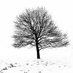 Snow Abstractions 5 (ChrisdMRF) Tags: park uk greatbritain blackandwhite bw snow abstract tree london monochrome landscape mono blackwhite britishisles unitedkingdom richmond gb highkey richmondpark 2013