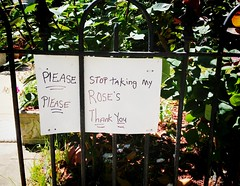 please stop taking my roses (ekelly80) Tags: flowers roses sign fence washingtondc dc sstreetnw welovedc may2013 pleasestoptakingmyroses