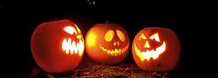 pumpkins_cropped