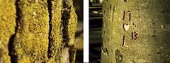 ARBOLES DE AMOR (Barcelona'sblues) Tags: mountain tree musgo love amor details rbol catalunya aire fresco pirineus
