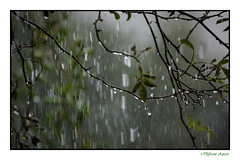 Looking out at the Rain (Different Aspects) Tags: heavy rain raindrops splash