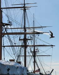 Rigging silhouette (gillybooze) Tags: allrightsreserved rigging ropes mast ship hmswarrior sky weather bird bif clouds navalhistory navy
