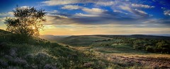An evening on the hills (OutdoorMonkey) Tags: panorama panoramic somerset quantocks quantockhills countryside outside nature rural sunset sun sunshine evening hill