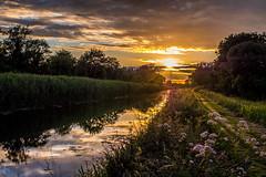 Royal Summer Evening (cogy) Tags: royal canal kilcock kildare ireland summer evening
