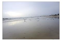 DSCF0168 copie (sylvainbachelot) Tags: baule pornichet plage sable mer ciel vague matin soir soleil mauijim coquillage toile de bord lumire mlancolie fujix70 panorama nature