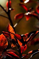 Blatt_016.jpg (greiner_max) Tags: leave america2016 hoglezoo object america plants places saltlakecity destinations flora genre objekt ortschaften pflanzen