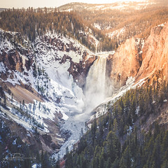 Grand Canyon of the Yellowstone (AmaurieRaz) Tags: may melting snow ice rock falls water trees usa wyoming earthviews beauty landscape travelphotography travel orlandophotographer squareformat square 2470mm waterfall majestic outdoors 7d nationalpark yellowstonenationalpark grandcanyonoftheyellowstone yellowstone canonusa canon