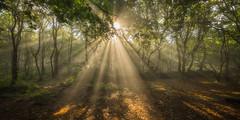 The shining (dannyhow2011) Tags: honley huddersfield kirklees westyorkshire pennines woods woodland fog mist sunburst woodlandmist landscape forest nikon d810 nikkor1635