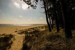A forest by the sea (Costigano) Tags: beach sand forest trees seaside coast shoreline ireland irish wexford ravenhead canon eos