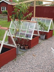 Greenhouses from Repurposed Windows (irecyclart) Tags: greenhouse miniature planter pots repurposed window