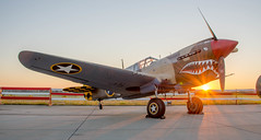 P-40 Warhawk Sunrise (SemperFi97) Tags: wwii warhawk aircraft propeller ace fighter 1940s war plane tiger flying tigers shark mouth iconic americana vintage classic japan island hopping pacific ocean volunteer army pilots mercenary world proud red white blue usa usaaf