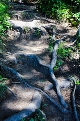 oregon (33 of 147) (SPLTImage Inc.) Tags: oregon trip travel vacation waterfalls ecola coast westcoast nature naturephotography