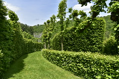 Vgtation luxuriante d'un labyrinthe (Flikkersteph -4,000,000 views ,thank you!) Tags: springtime garden greenery footpaths trees hedges foliage lawn plants vegetation cloudy castle shadow touristic tranquillity beauty nature hastire wallonia belgium