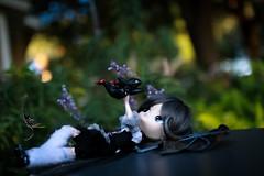 One Day (dreamdust2022) Tags: eris sweet cute charming happy playful tender loving hug kiss magical little young baby dragon girl dal doll sparrow dama mizar