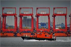Port of Liverpool 7th October 2016 (Cassini2008) Tags: portofliverpool zhenhue8 china rivermersey liverpooldeepwatercontainerterminal peelports