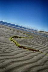 Sinuosity (ItalishMagazine) Tags: ifttt 500px italishmagazine italish irlandesidentro irishinside irlanda ireland dublino dublin nature photograph pics bull island sea sand beach rope algae