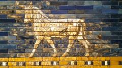 Aurochs Of Babylon (canaanite98) Tags: iraq irak aurochs babylon ishtar gate assyria babil pergamon museum deutschland lions wall island civilization