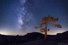 Milky Way & Jeffrey Pine (don.mowrer) Tags: olmsteadpoint starrynightadventure yosemitenp jeffrey pine milky way
