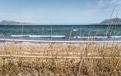 Beach (rgcxyz35) Tags: grass salbufereta spain waves kitesurfschool balearicislands mallorca island mediterranean nationalpark samarina coast sea