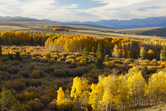 Conway Summit (Laura Zirino) Tags: autumn fall fallcolors conwaysummit easternsierra landscapes landscape ca california aspens