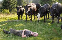20160812_028_DennisWansink (Dennis Wansink) Tags: zoogdiervereniging zomerkamp bergen jura koe bostaurus berndjanbulsink vaud zwitserland ch
