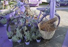 A violet bicycle scented of lavender. (Marythere *on/off*) Tags: bicycle scentedoflavender market violetcoloured lavandadellago desenzanodelgarda