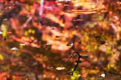 Autumn Soup (jasohill) Tags: autumn october landscape tohoku vibrant city 2016 iwate trees adventure travel photography life colors hachimantai color japan nature eos 80d