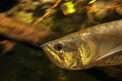 IMG_5717 (godpasta) Tags: newportaquarium kentucky newport aquarium