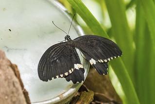 Trassenheide - Schmetterlingsfarm