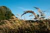 Gras im Wind (Sylsine) Tags: iserlohn menden sümmern wälkesberg gras herbst sauerland