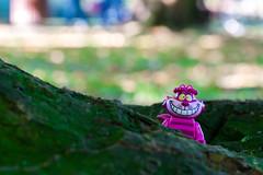 Cheshire cat (2) (Ballou34) Tags: 2016 650d afol ballou34 canon eos eos650d flickr lego legographer legography minifigures photography rebelt4i stuckinplastic t4i toy toyphotography toys rebel stuck plastic hamburg sipgoeshamburg2016 cheshire cat alice wonderland root tree green purple