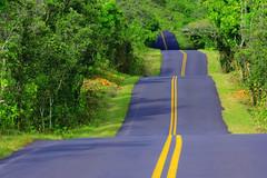 42-15850270 (wrzeszcz.it) Tags: blacktop direction forest lush nobody outdoors pavement rainforest road roadtrip transportation traveling tropicalrainforest upanddown winding woodland