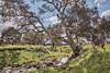 Moonee Ponds Creek 2016-09-30 (6D_3789-91) (ajhaysom) Tags: mooneepondscreek woodlandshistoricpark woodlandshomestead greenvale australia canoneos6d canon1635l