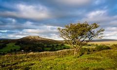 Hawthorn & Sheeps Tor, Dartmoor_NK2_2804 (Jean Fry) Tags: burrator dartmoor dartmoornationalpark devon englanduk moorland nationalparks sheepstor uk westcountry trees tors hawthorns